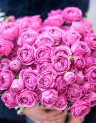 Пионовидная роза сорта Misty Bubbles (Мисти Бабблс)